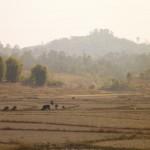 Paysage de rizieres